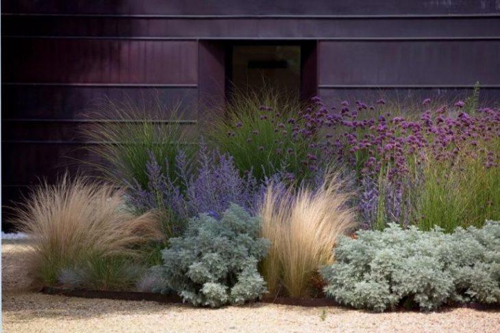 декоративная трава для сада