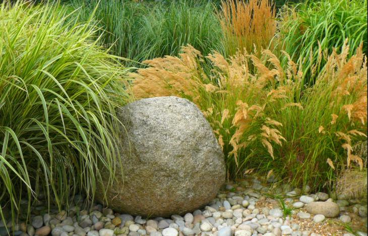 виды декоративных трав