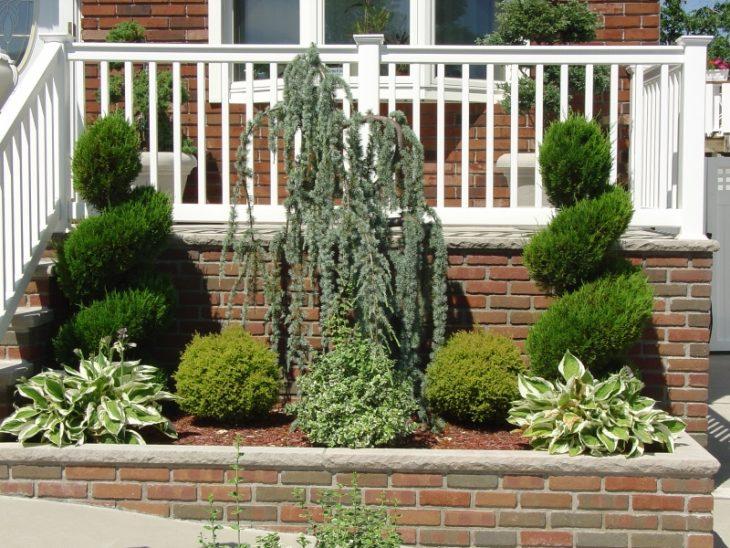 названия хвойных растений для сада