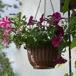 балконные цветы солнечная сторона