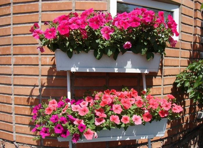 балконные цветущие цветы