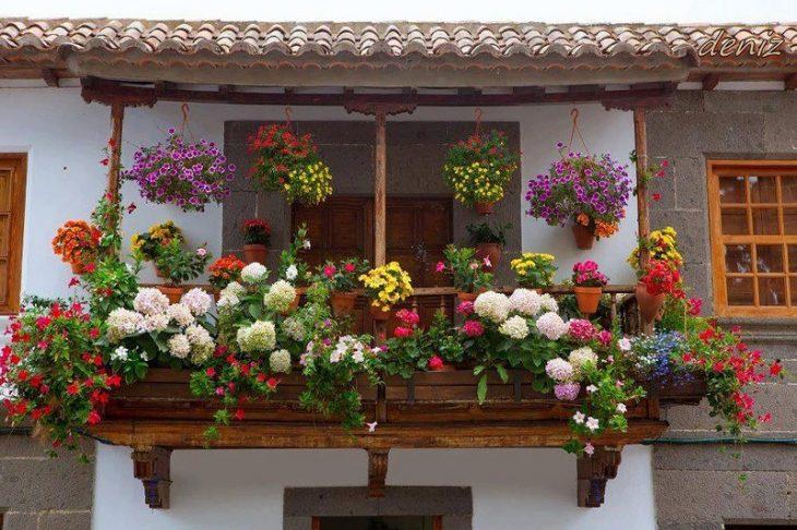 семена балконных цветов