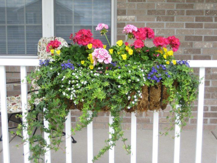 неприхотливые балконные цветы
