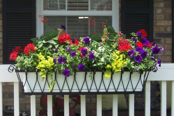 названия балконных цветов