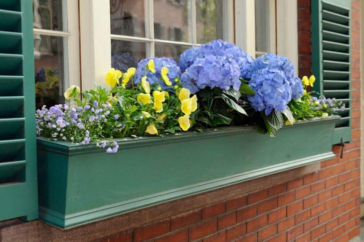 красивые балконные цветы