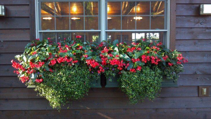 какие цветы посадить в балконные ящики