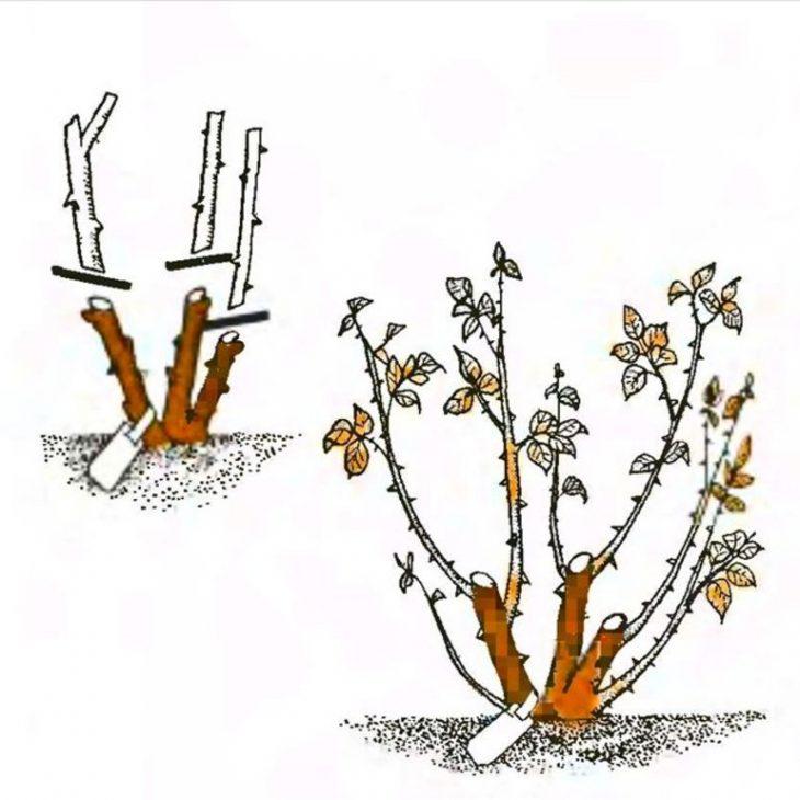 инструменты для обрезки кустарников