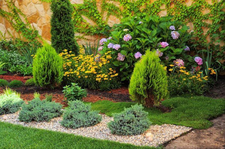 выращивание можжевельника в саду